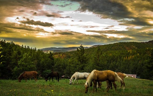 horseback-riding-in-the-mountains-of-blue-ridge
