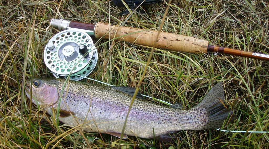 prize trout lying next to fishing pole on the bank